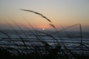 Sea Grass Sunsets by B. Goody